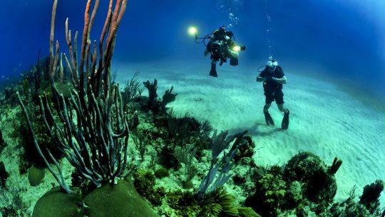 Plongée à Vanuatu : se laisser charmer par ses merveilles marines